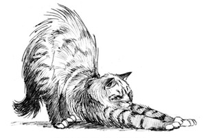 Pilates-Ejercicios-Gato