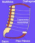 Transverso-Del-Abdomen-Suelo-Pelvico