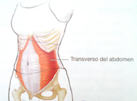 Transverso-Del-Abdomen