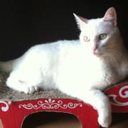 joseph-Pilates-ejercicios-gato